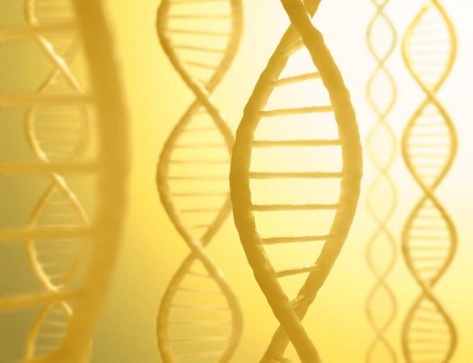 Что такое диплоидный набор хромосом