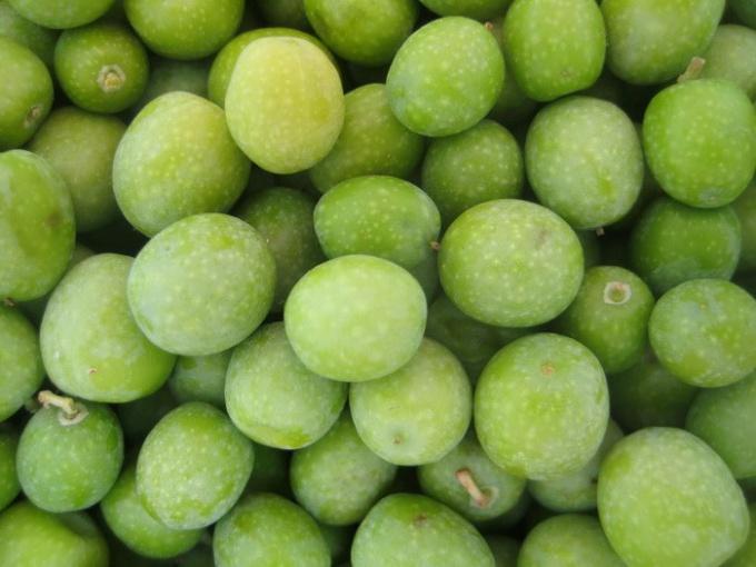 В чем разница между маслинами и оливками