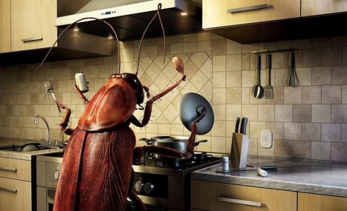 К чему снятся тараканы?