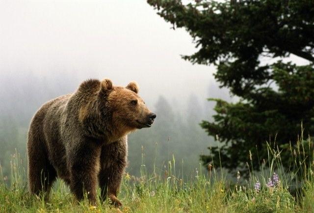 Где живут медведи