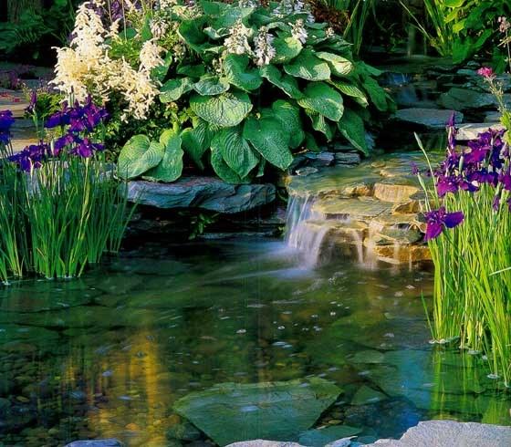 Как украсить пруд