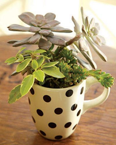 Arrangement of succulents - an original gift