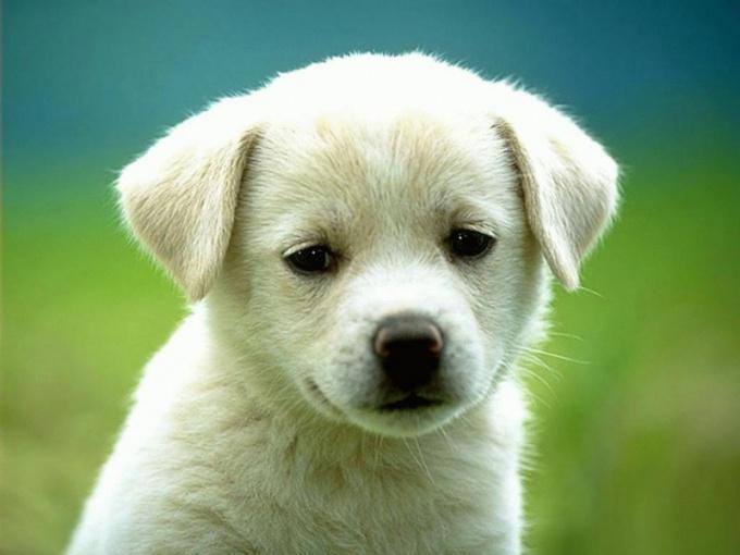 что делать если у собаки перхоть