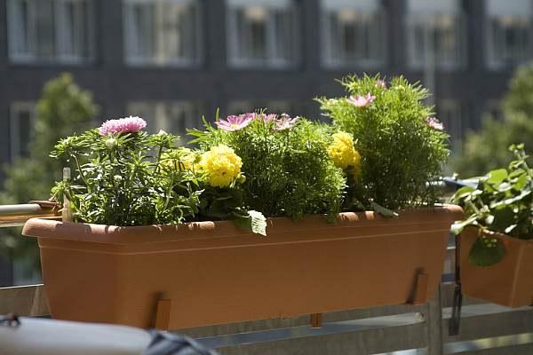 Какие цветы лучше сажать на балконе ?? в какое время высажива.