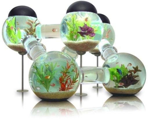 Как открыть аквариумный бизнес