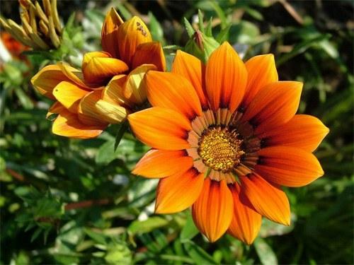 Как ухаживать за цветами на даче