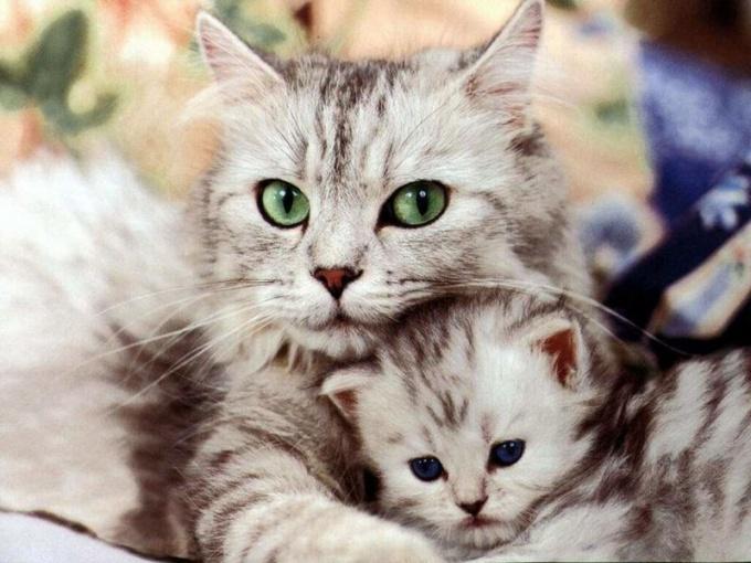 Авитаминоз у кошек