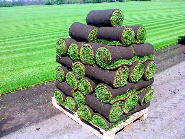 Живой ковер на дачных участках: газон