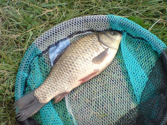 How to lure carp before fishing