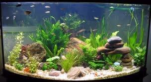 Как красиво оформить аквариум?