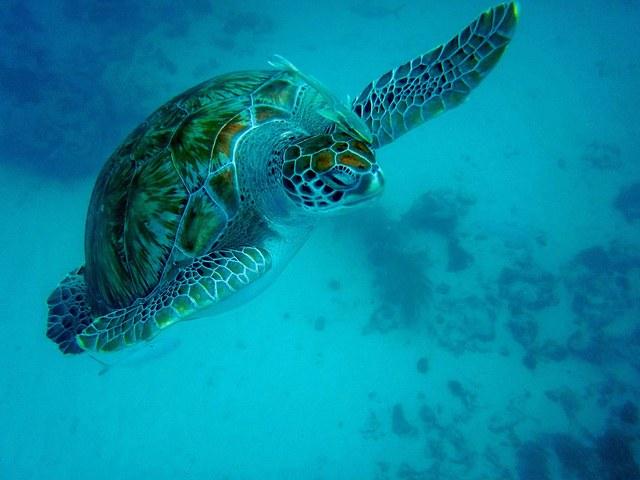 На Барбадос в поисках экзотики и райского отдыха