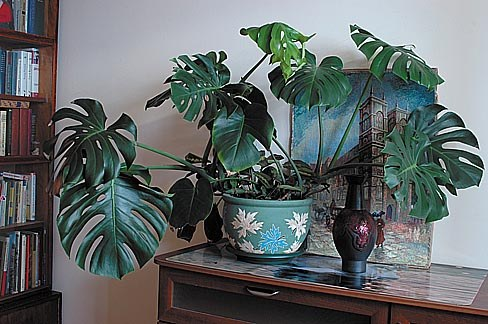 Комнатные растения: враги и друзья