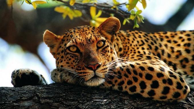 Какие национальные парки Кении самые интересные