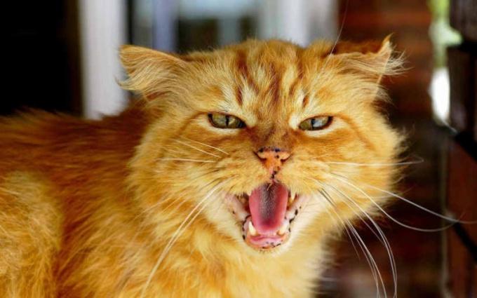 Как бороться с агрессией кошек