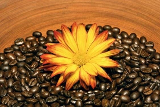 Кофейные скрабы