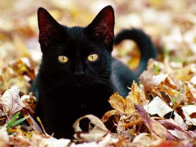 Как удалить запах от кошки в доме