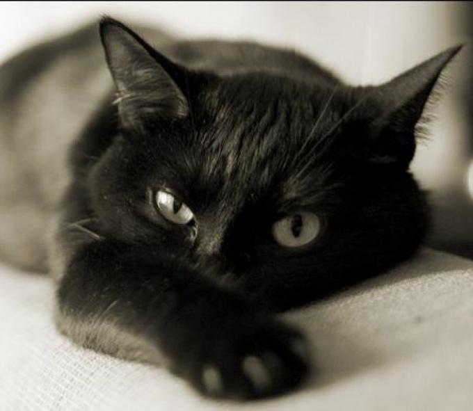 Как избавиться от ушного клеща у кота