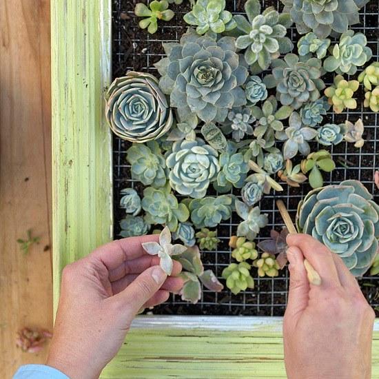 Как сделать живую картину из суккулентов для украшения гостиной или террасы