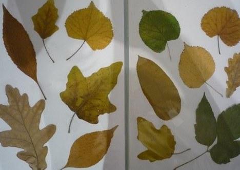 Как составить гербарий