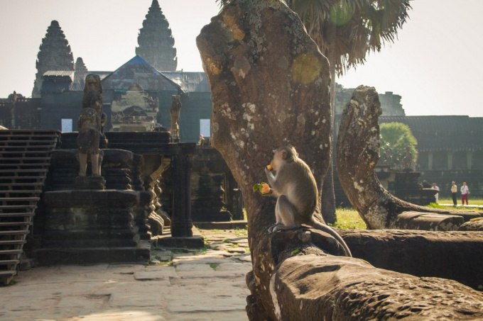 Independent travel to Cambodia