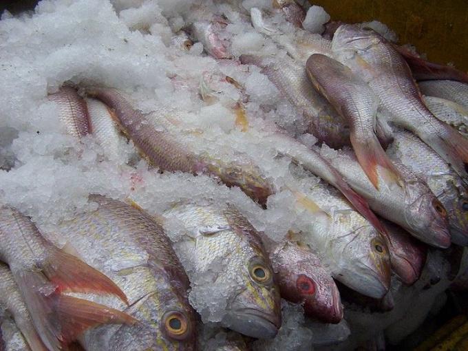 Сколько можно хранить замороженную рыбу
