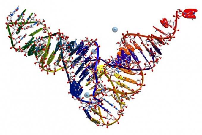 Какие виды РНК существуют в клетке, где они синтезируются