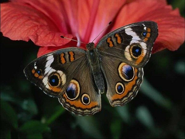Even the most beautiful butterfly in a patient with insectophobia causes fear
