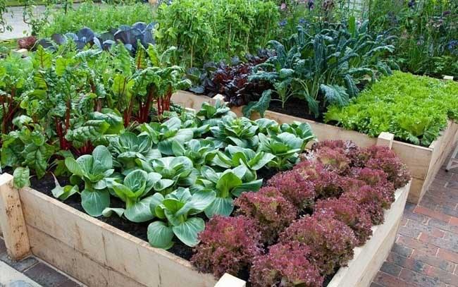 Окупается ли свой огород?