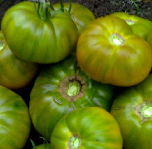 Зеленый помидор - вкусный салатный деликатес