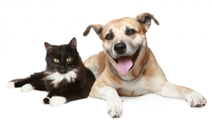 What is uremia in cats and dogs
