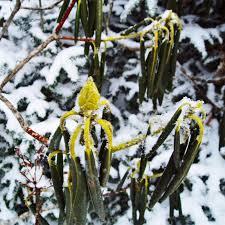 Как защитить растения зимой