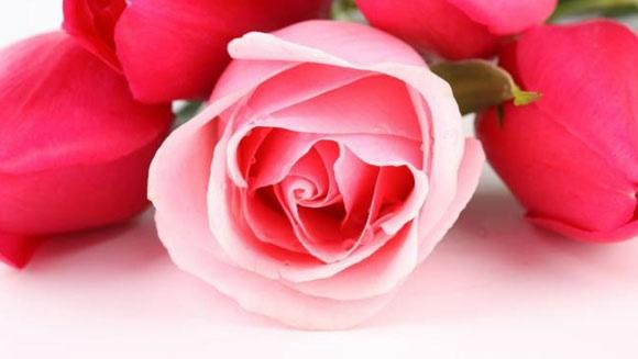 Букет цветов станет прекрасным подарком