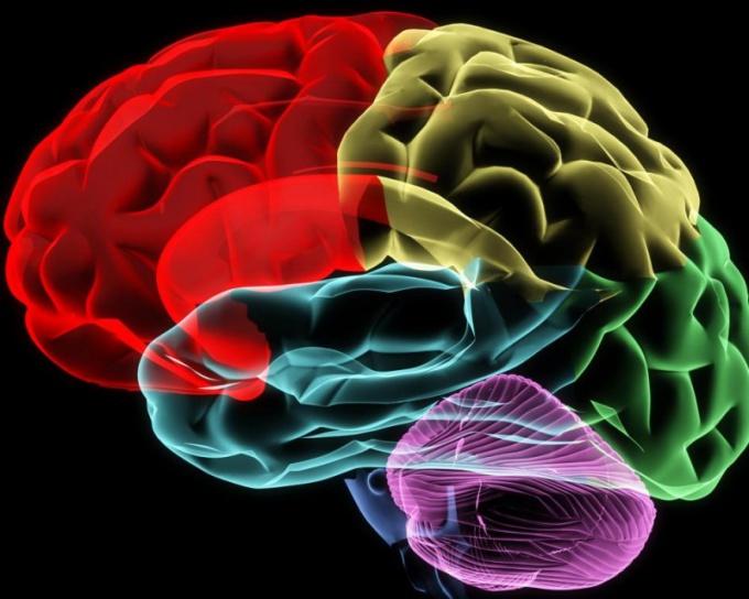 Для чего нужна кора головного мозга