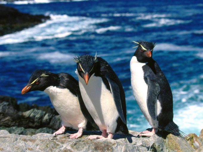 живут пингвины