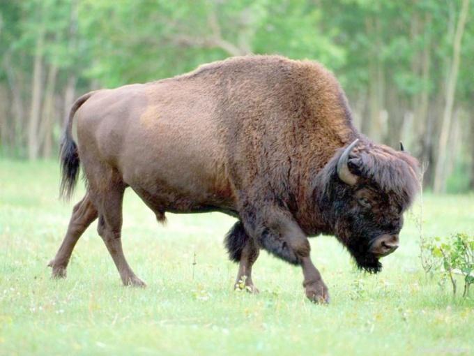 Какие реликтовые животные обитают на территории России