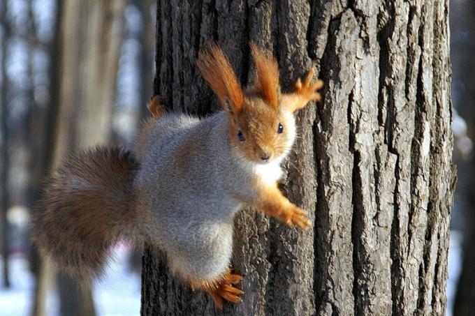 Какие животные делают запасы на зиму