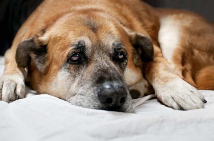 у собак лечение