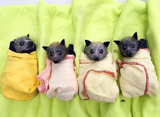 20 сентября – Ночь летучих мышей