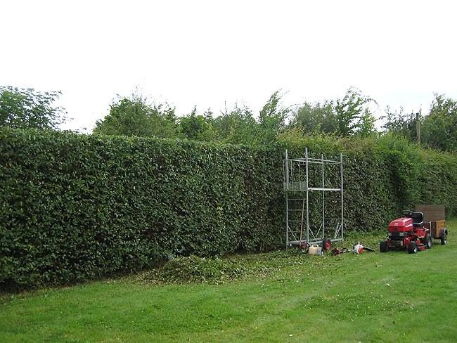 Как сделать живую изгородь на даче