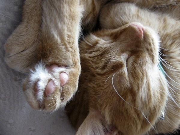 Частая причина аллергии - кошка
