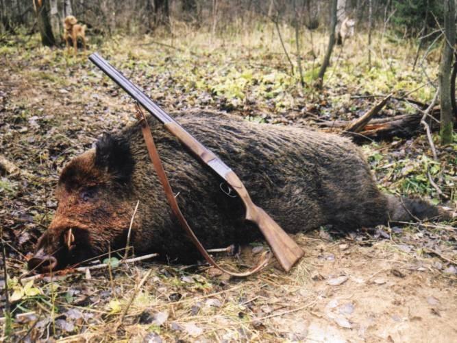 Как называется охотник без лицензии, нарушающий закон