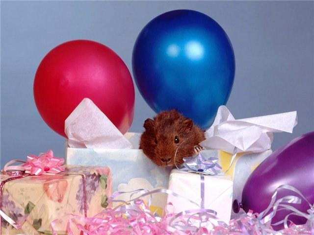 Какое животное подарить на день рождения
