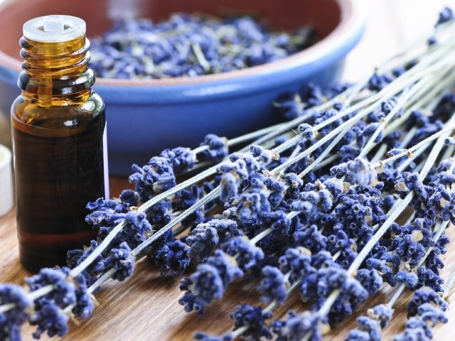 Essential oil against the fungus