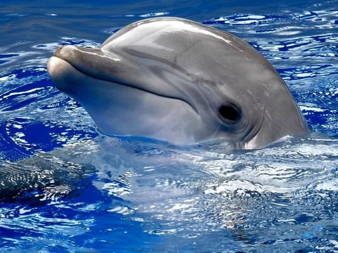 Сколько может пробыть под водой дельфин, чтобы не утонуть
