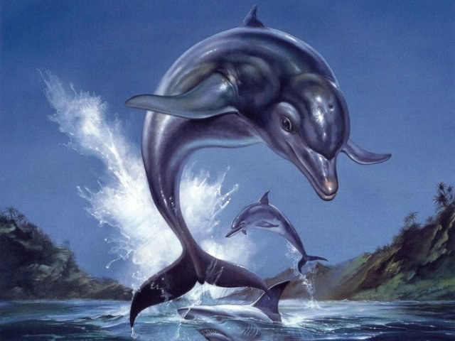 Dolphin dream