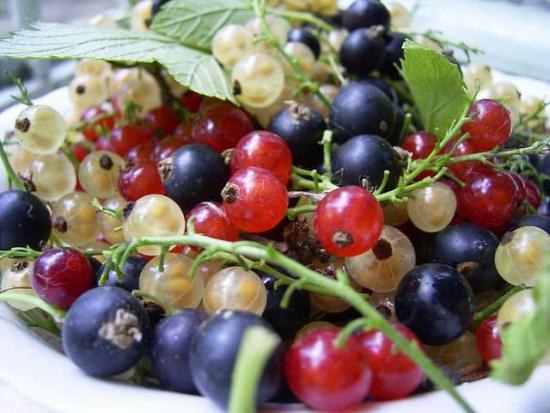 How to collect currants