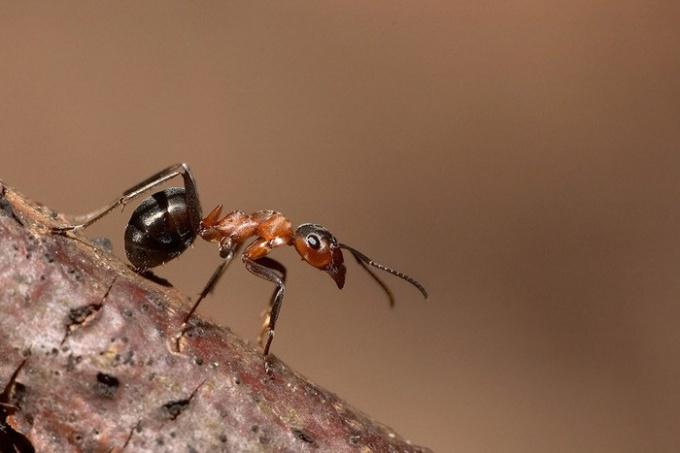 Видеть муравья во сне