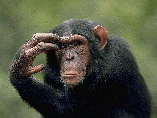 Какой характер у знака восточного календаря черной обезьяны