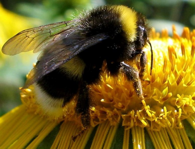 How and where to nest and live bees