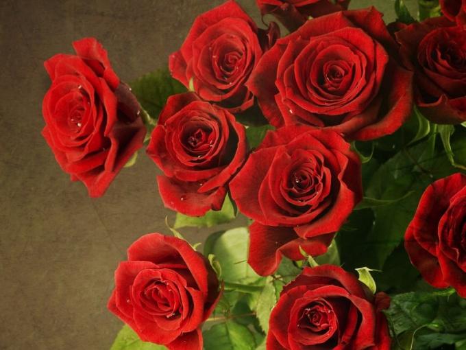Красные розы во сне - символ любви и страсти